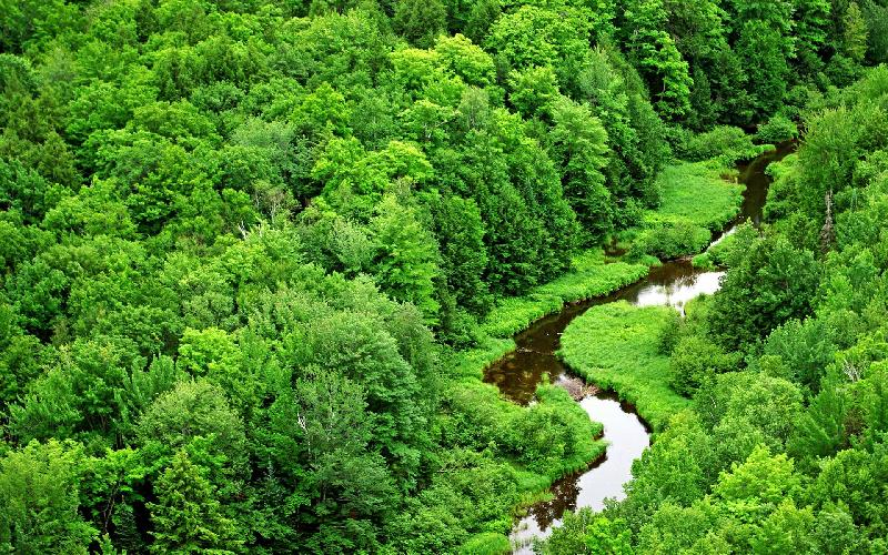 green-forest-and-river