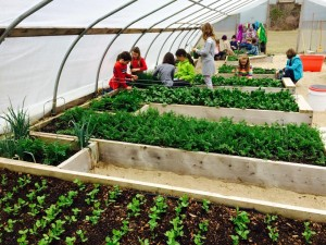 School children learn how to grow food in greenhouse.