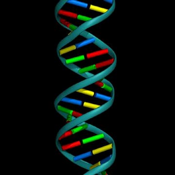 Six steps to dna activation shifting vibration a domain of life forms composed of one or more cells is known as a eukaryote for life forms on earth there are four domains which include animals plants malvernweather Images