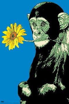 monkey-flower2