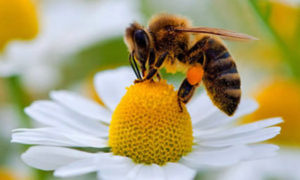 bees74_01