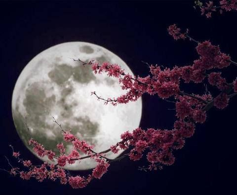 Full Moon Distant Healing Event on Wednesday, 10 May! Flower-moon1