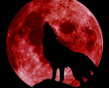 "Rare celestial event coming soon - ""Super Wolf Blood Moon"" Blood-moon-with-wolf-370x297"